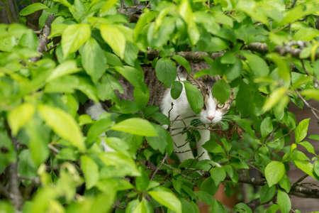 Domestic cat on a plum tree among leaves Standard-Bild