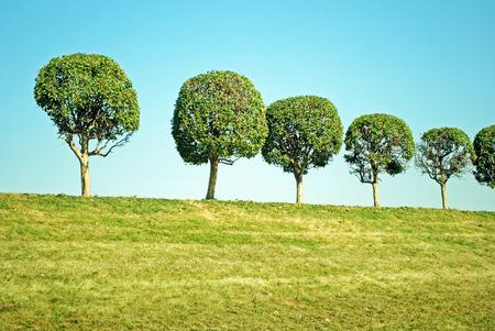 peterhof: Trees on the hill in Peterhof, Russia Stock Photo