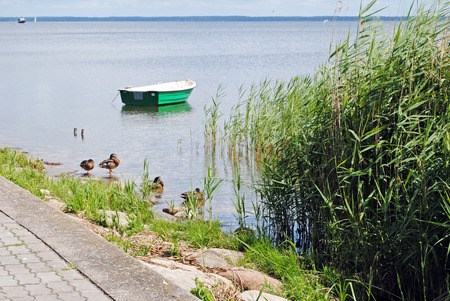 green boat: green boat and ducks in Curonian Bay, Nida, Lithuania