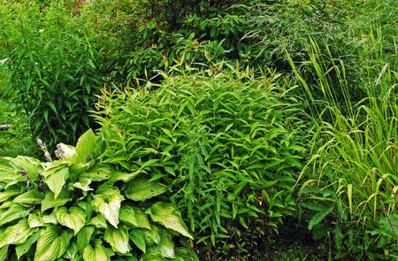 buisson: différents vert des buissons et des herbes de fond Banque d'images