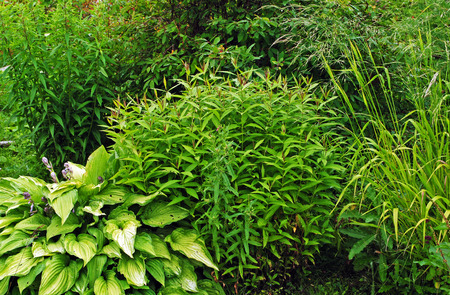 bush: different green bushes and herbs background Stock Photo