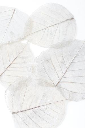 Skeleton leaves  Imagens