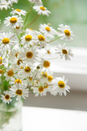 daisie: Bouquet of daisies in the window