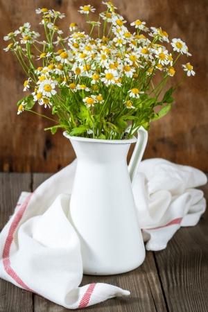 Feverfew (Tanacetum parthenium), medicinal herb
