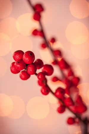 winterberry: Winterberry Christmas branches with red holly berries Stock Photo