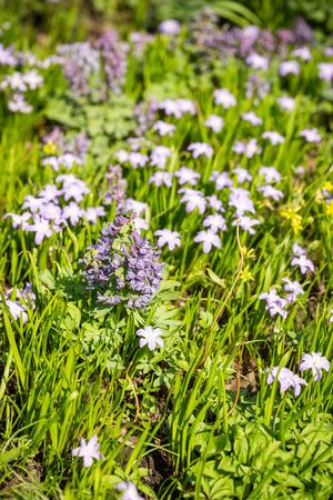 Prato Di Fiori Di Primavera Nel Parco Foto Royalty Free, Immagini ...