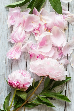 Beautiful Pink peonies and petals on wood background