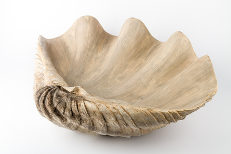 Decoration for home in the form of large mollusk shells on a white background