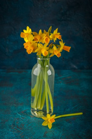 Bright spring yellow miniature daffodils in glass bottles Stock Photo