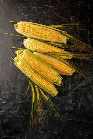 Fresh raw ripe corn cobs and wheat spikes on black concrete background