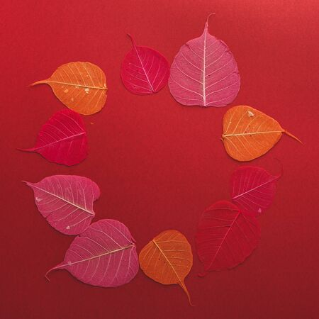 Autumn frame of skeletonized leaves on a red background. Flat lay, copy space.