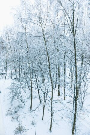 Winter snowy day in a beautiful at the edge of the forest