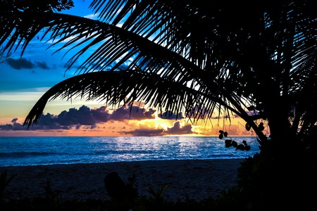 Sunset and shadow of palm leaves at island Praslin, Seyshels. photo