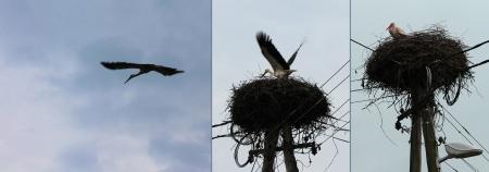 Stork frames Stock Photo - 13629240