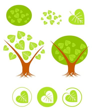 linden tree: Linden