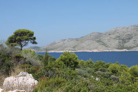 Islander bay