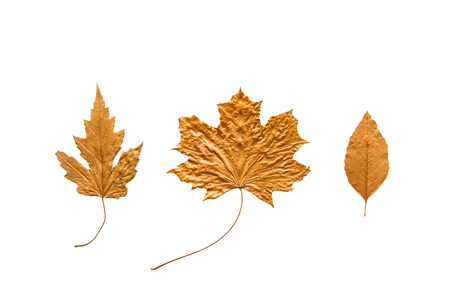 Autumn metallic gold copper leaves set isolated on white. Different fall metallic paint leaves kit on white background with copy space. Various metallic decorative leaves Stock Photo