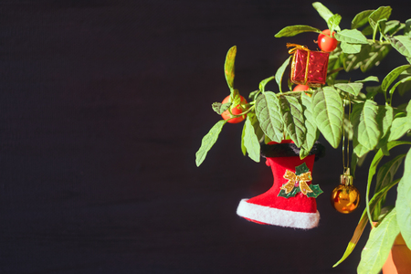 Nightshade Christmas tree with red Xmas boot, ball and gift box. Green pot plant Nightshade with berries and red Christmas decoration on dark background. Stock Photo - 116219860