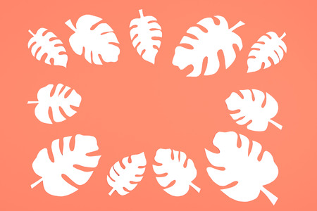 White paper Monstera leaves on coral orange background with copy space. Summer tropical exotic palm plant frame flat lay, top view