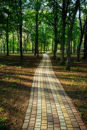 Alley, pathway in the city park in sunlight. Cobbled alley in the public  park. Green tree foliage. Nature outdoor vertical landscape with road, way, trees. Footpath in wood