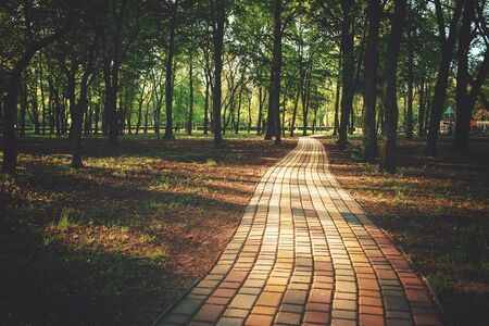 Alley, pathway in the city park in sunlight. Cobbled alley in the public  park. Green tree foliage. Nature outdoor landscape with road, way, trees. Footpath in wood