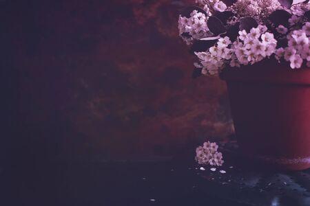 Moody Floral dark background. Mystical Deep red purple flower on black background.
