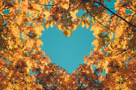 Autumn fall love background. Orange and yellow leaves in heart shape of background of blue sky. Heart-shaped sky through autumn trees in the park. 写真素材