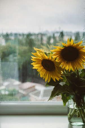 Summer rainy cold weather. Bouquet of sunflowers in vase on windowsill on rainy day background. Scandinavian home sunflower decor. 写真素材