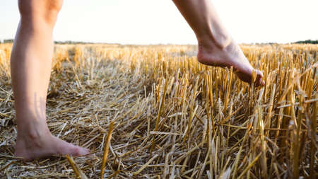 Overcome obstacles depression concept. A woman's foot makes a step over a sharp prickly mown straw.