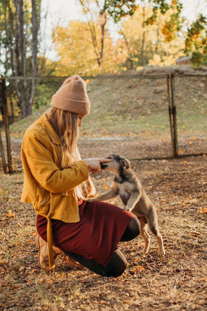 World Animal Day. Woman Volunteer meeting homeless dog puppies in fall nature background. Pet love, caring for a pet and animal adoption concept. Imagens