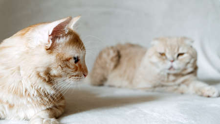 Introducing Two Cats. Adopt a Second Cat. Adding a second cat to your household. Peaceful multi-cat home companions, playmates.