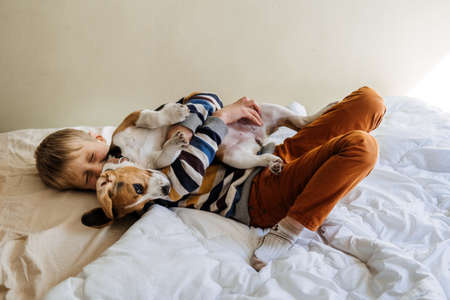 Best Dog Breeds for Kids, Good Family Dogs. Introducing Puppies and Children. Cute little Beagle puppy and kid boy playing in bed at home 免版税图像