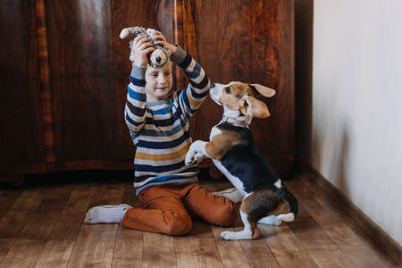 Games to play with beagle puppies. How to Entertain puppy and adult Beagle Indoors, Fun Ways to Exercise Beagle. Cute little Beagle puppy and kid boy playing on the floor at home