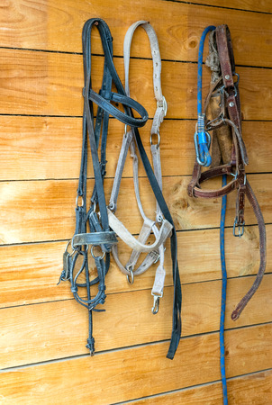 headcollar: Horses harnesses hanging on wooden wall of barn