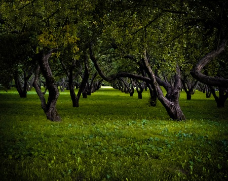 sullen: Lawn path between trees lawn in city sullen park Stock Photo