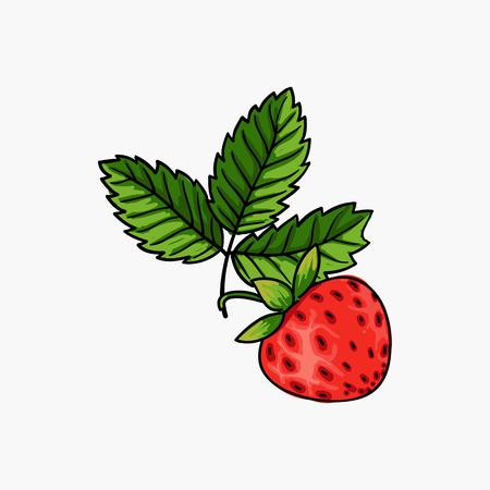 flourishing: beautiful strawberries composition isolated on white background