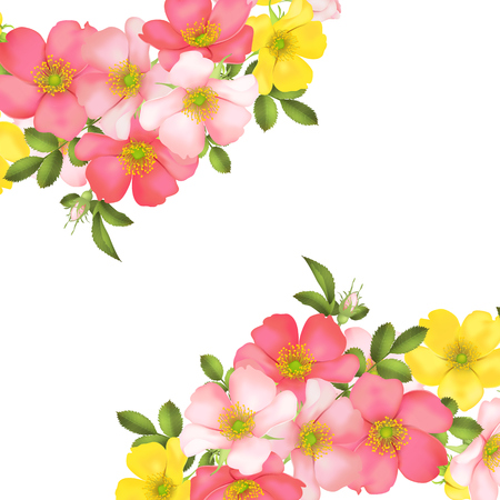 Dog-rose blooms. pink and yellow wild rose vector illustration