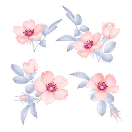 Pink wild rose vector set Illustration