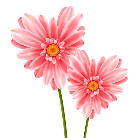 Gerbera flower heart isolated on white background Illustration