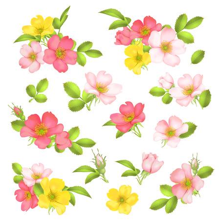 Dog-rose blooms wild rose vector set Illustration