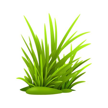 Green grass leaves, vector eps realistic illustration Illustration