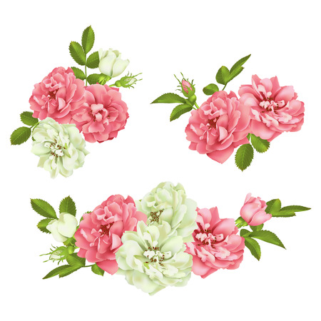 Realistic vector pink rose set. Illustration