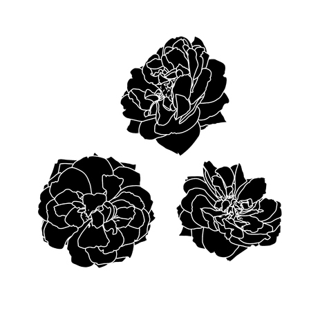 Set of three vector black silhouettes of rose