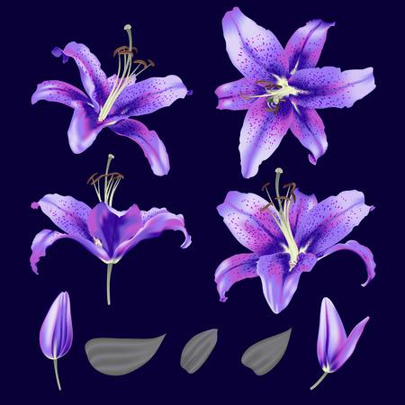 vector ultraviolet lily flower blossom set  イラスト・ベクター素材