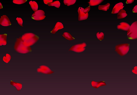 red sakura or rose falling petals
