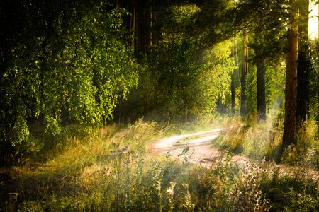 Magical autumn forest landscape. Sunrays in morning. Banque d'images - 131824554