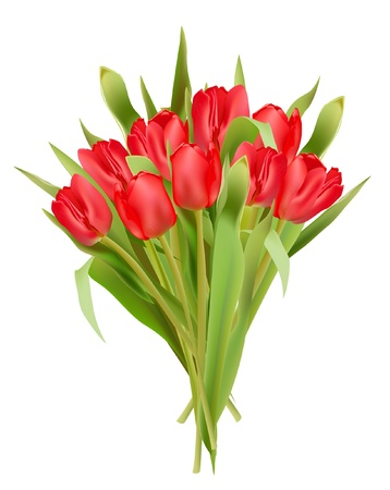 realictic: tulips Illustration