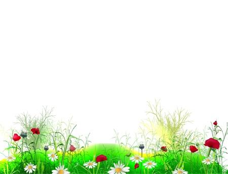 poppy on the field Vector