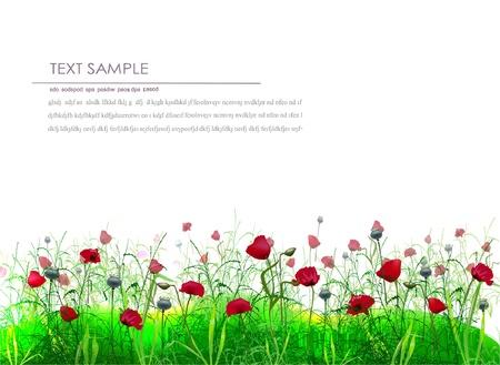 poppy on the field Stock Vector - 10375541
