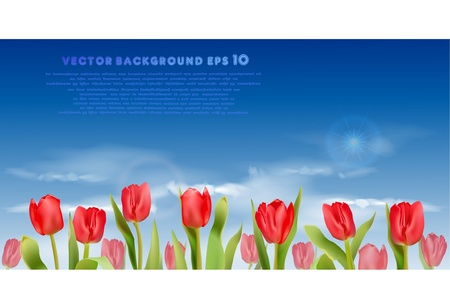 tulips field  Stock Vector - 10386551